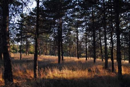 ODTÜ Ormanı